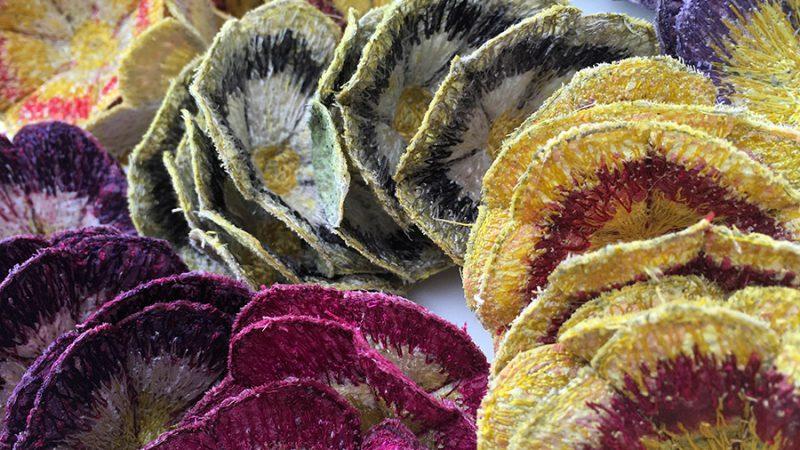 Auricula Flowers (Detail) - NYOS 2017