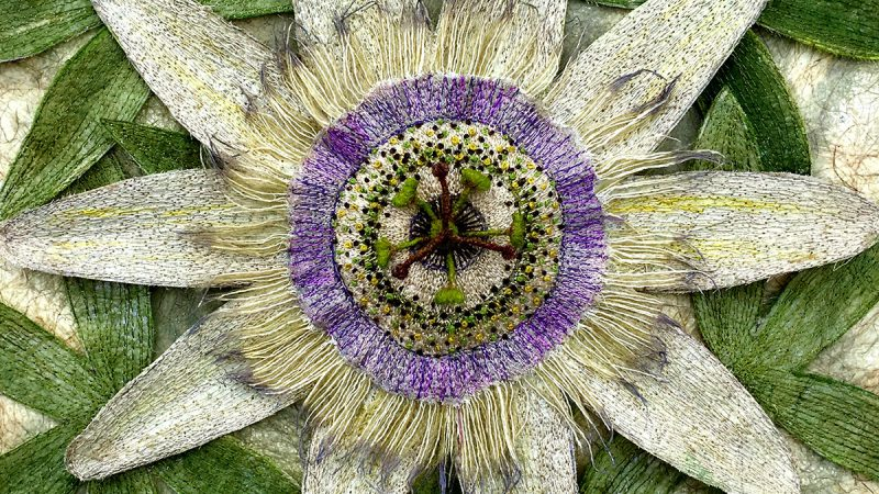 Passion Flower - Newby Hall