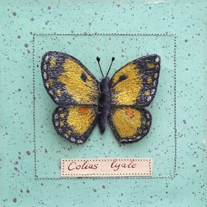 Clouded Yellow Butterfly (Detail)