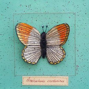 Orange Tip Butterfly Large (Detail)
