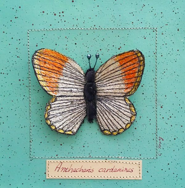 Orange Tip Butterfly Large (Detail)