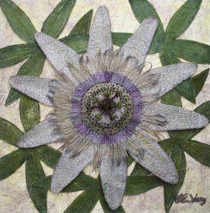 Passion Flower - Newby Hall
