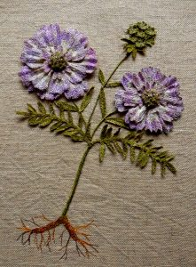 Scabious 'Purple Bouquet'