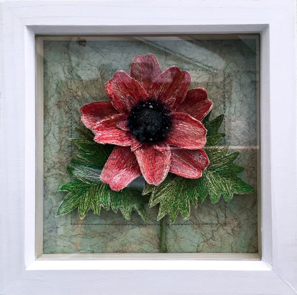 Anemone 'Coronaria' (Frame)