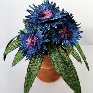 Cornflower Pot Plant