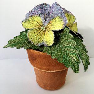 Pansy Pot Plant