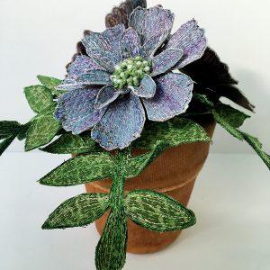 Scabious Pot Plant