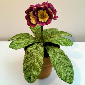 Auricula 'Cherry Picker'