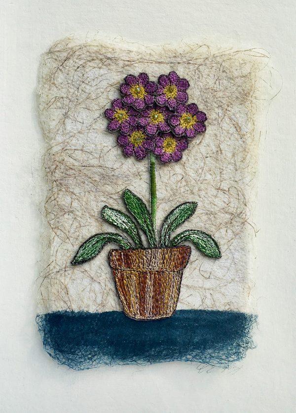 Lilac Auricula