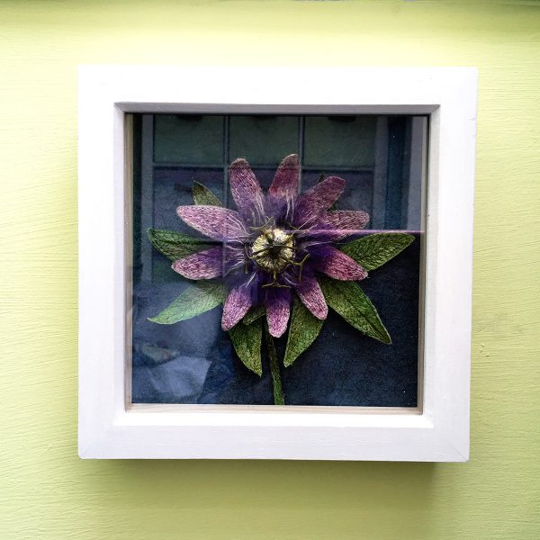 Passion Flower (Frame)