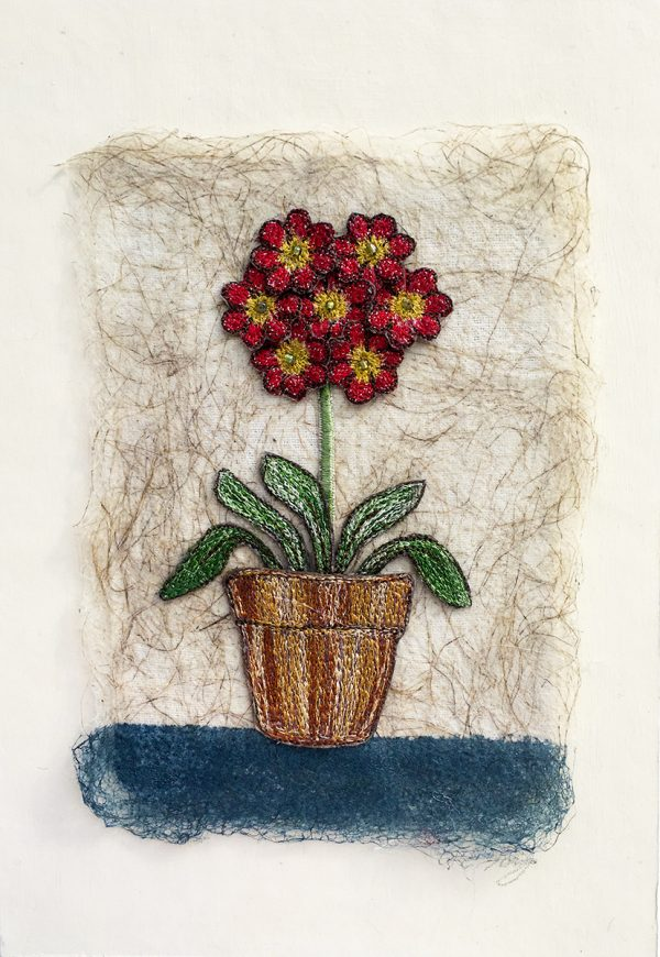 Red Auricula