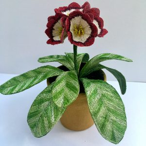 Auricula 'Dales Red'